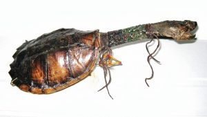 Native American Turtle Rattle