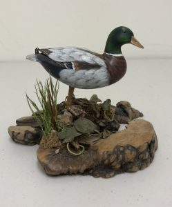 Carved Mallard Duck